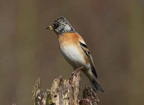 mijn nieuwe kant van vogel fotografie