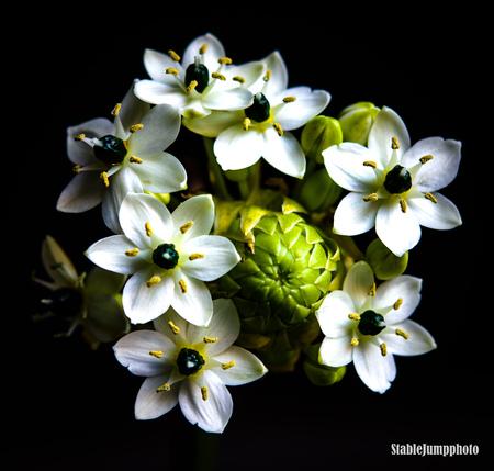 Flowers - Flowers make you smile - foto door Syltam op 14-04-2021 - deze foto bevat: bloem, fabriek, bloemblaadje, terrestrische plant, bodembedekker, bloeiende plant, wildflower, eenjarige plant, stillevenfotografie, pedicel
