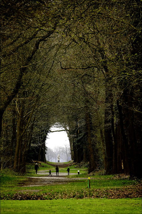 het bos herontdekt.................