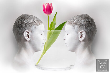 Face or Vase?