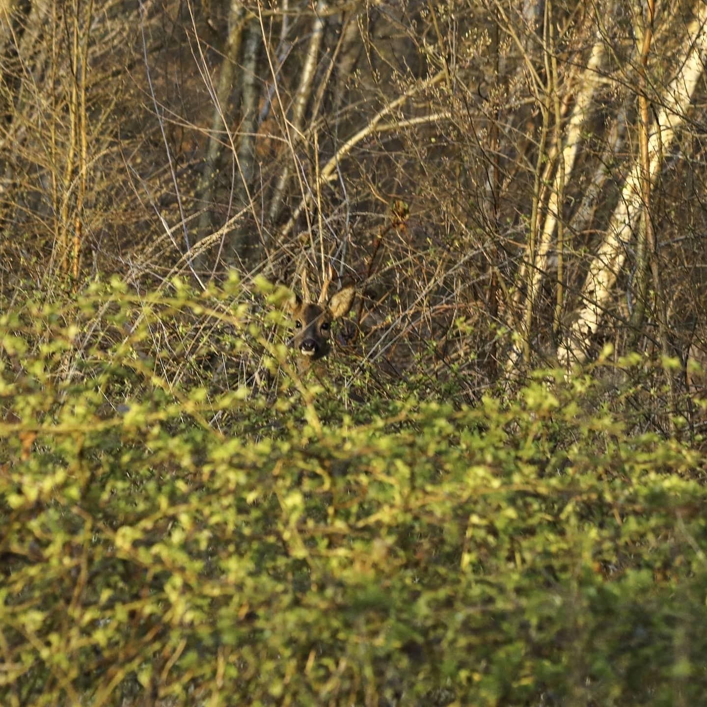 Zoekplaatje - Zoekplaatje - foto door Erikvdzwan op 16-04-2021 - locatie: 8181 Heerde, Nederland - deze foto bevat: takje, natuurlijk landschap, hout, fabriek, kofferbak, gras, bodembedekker, tinten en schakeringen, bladverliezend, boom