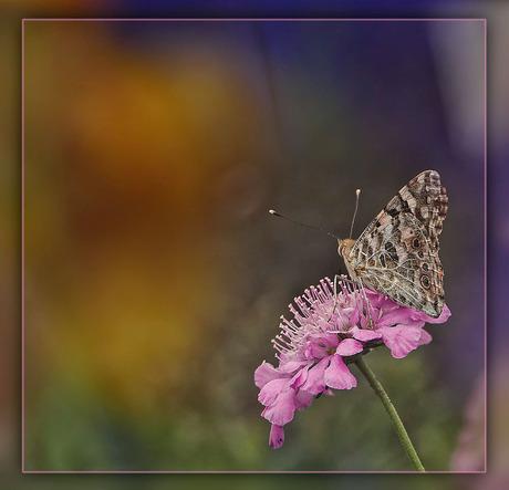 bloem met vlinder...........................