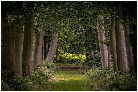 Heilooer bos