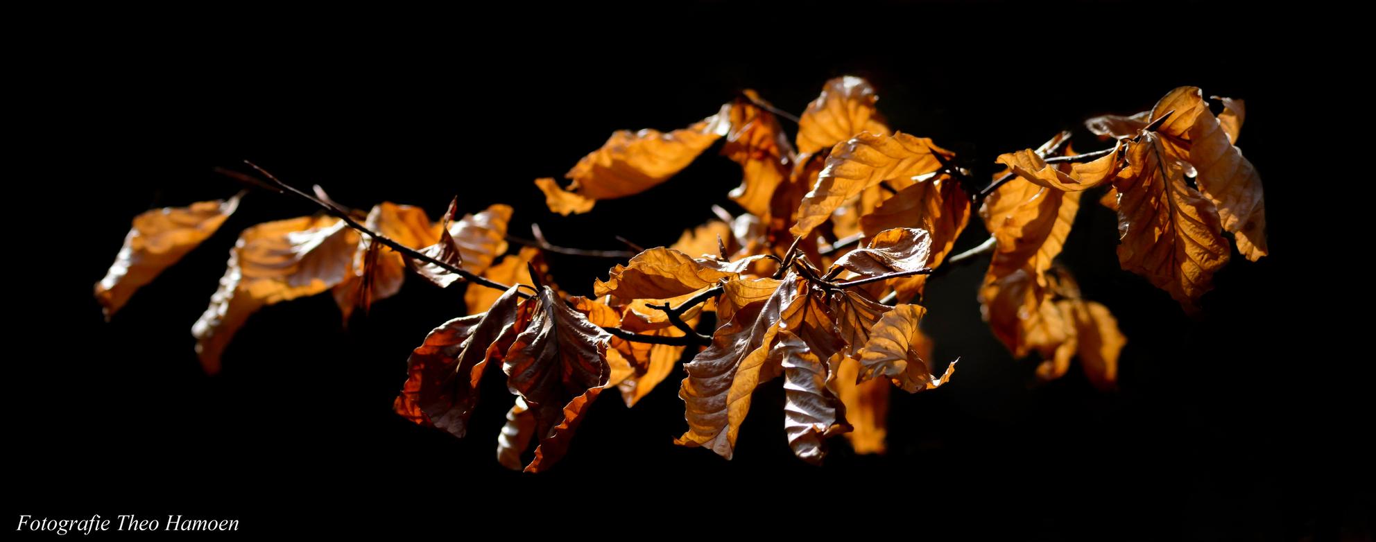 Simpel wat zonlicht - Wat zonnestralen en wat blaadjes....hoe simpel kan het zijn - foto door theo_hamoen op 08-04-2021 - locatie: Hoenderloo, Nederland - deze foto bevat: natuur, zonlicht, bladeren, bos, eenvoud, takje, amber, natuurlijk landschap, bladverliezend, tinten en schakeringen, bloeiende plant, detailopname, macrofotografie, evenement, stillevenfotografie