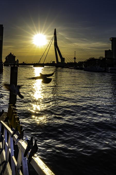 Zonsondergang Erasmusbrug - Voor mij persoonlijk de mooiste brug van Rotterdam. - foto door Batman010 op 08-04-2021 - locatie: Rotterdam, Nederland - deze foto bevat: zonsondergang, de zwaan, erasmusbrug, rotterdam, duif, de maas, euromast, wolken, zon, water, lucht, boot, waterscooters, licht, nagloeien, wolk, schemer, zonsondergang, zonlicht