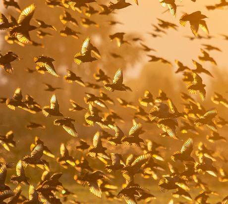 Golden Wings!