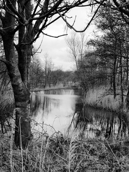 Sloot in het bospark - Zwart witte foto versie van een foto die ik eerder dit jaar gemaakt heb in het Bospark in Alphen aan den Rijn tijdens een van mijn vele wandelingen.  - foto door MonaSu op 11-04-2021 - locatie: Alphen aan den Rijn, Nederland - deze foto bevat: water, fabriek, lucht, boom, natuurlijk landschap, takje, hout, fluviatiele landvormen van beken, vegetatie, kofferbak