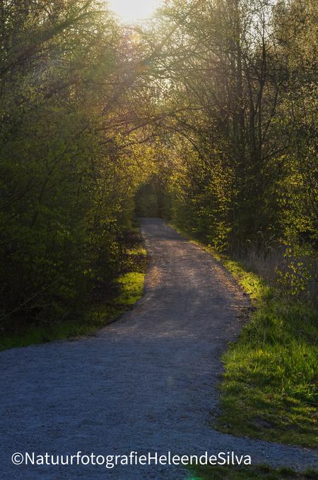 Zonsondergang door de bomen. - Tijdens een wandeling in het golden hour.  - foto door HeleendeSilva op 05-05-2021 - locatie: Balijbos, Nederland - deze foto bevat: zon, bos, bomen, pad, weg, zonsondergang, fabriek, natuurlijk landschap, lucht, zonlicht, weg oppervlak, asfalt, boom, waterloop, atmosferisch fenomeen, gras