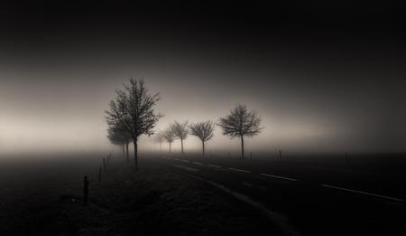 """Desperation Road - """"The lines on their faces Told the story of the places that they'd been Now their home is a highway That never seems to end  Empty dreams and empty p - foto door EJVH op 02-05-2021 - deze foto bevat: weg, diepte, licht, lijnen, bomen, boom, zwart-wit, schaduw, sfeer, atmosfeer, mist, mistig, atmosfeer, fabriek, lucht, natuurlijk landschap, boom, hout, wolk, zonlicht, arecales, zwart en wit"""