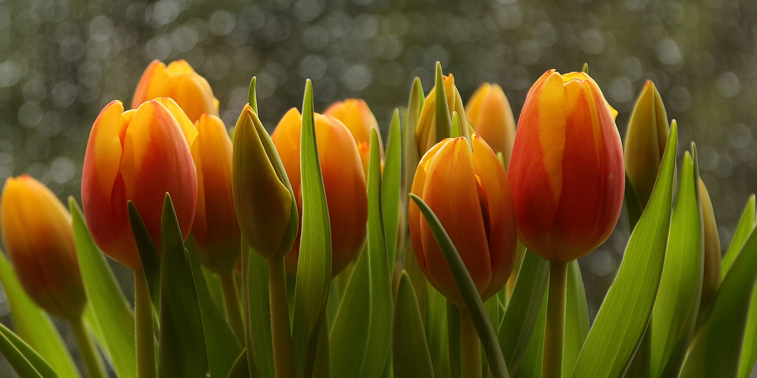voorjaarstulpen - bosje tulpen, ik kan daar uren mee zoet zijn.  - foto door onne1954 op 13-04-2021 - deze foto bevat: bloemen, tulpen, bokeh, rood, geel, groen, voorjaar, lente, bloem, fabriek, bloemblaadje, natuurlijk landschap, terrestrische plant, gras, bloeiende plant, weide, detailopname, macrofotografie