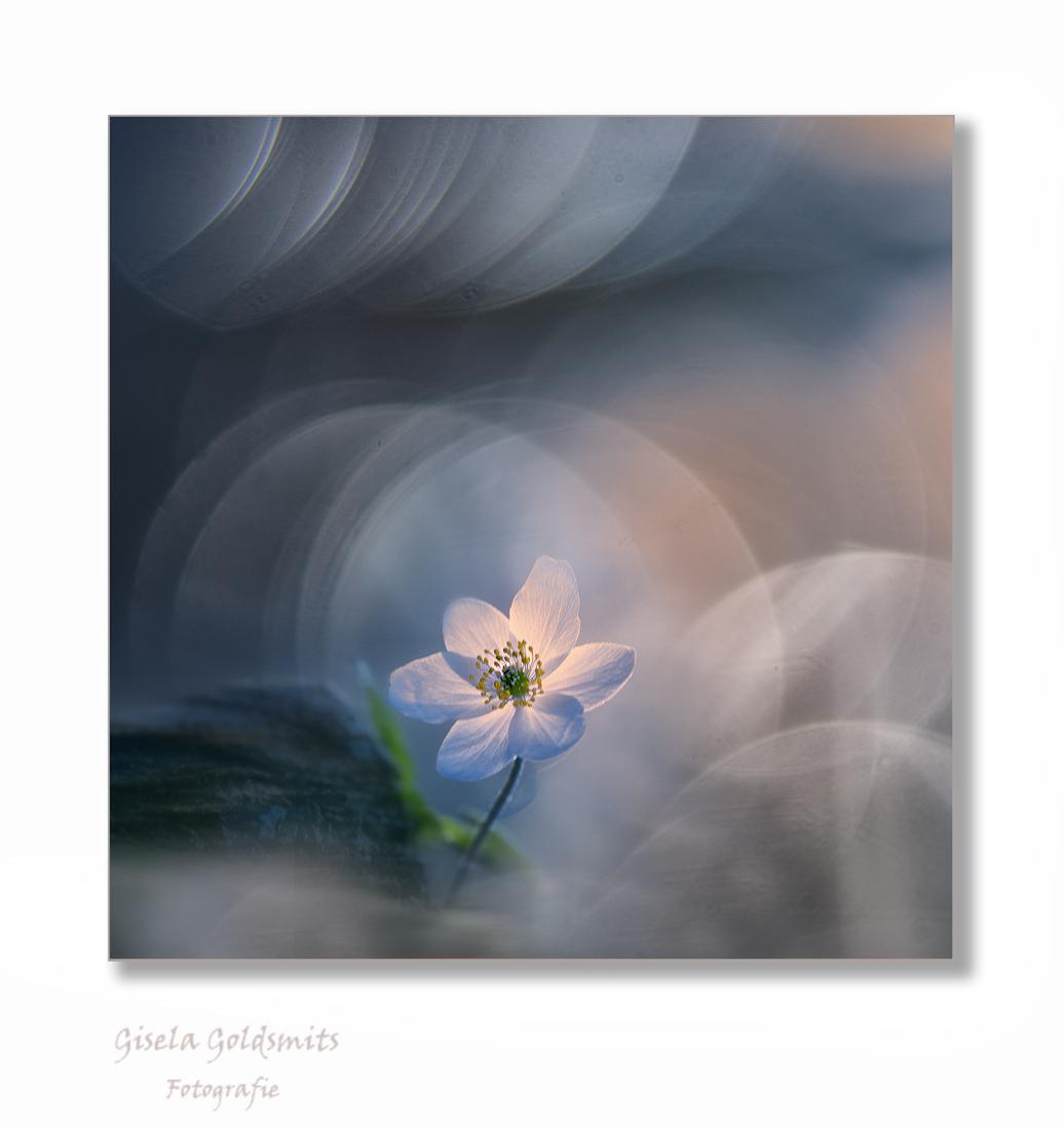 Langs het beekje  De Rothenbach - Beste Zoomers bedankt voor de fijne reacties op mijn vorige Upload  ,ik ben er heel blij mee  Liefs Gisela.  Even klikken voor een beter resultaat  - foto door 49-Gisela op 08-04-2021 - deze foto bevat: bloem, fabriek, bloemblaadje, gebaar, terrestrische plant, kunst, schilderen, natuurlijk landschap, bloeiende plant, verf