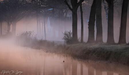 vroege ochtend - mistige ochtend - foto door olav_zoom op 15-04-2021 - locatie: Friesland, Nederland - deze foto bevat: atmosfeer, fabriek, natuurlijk landschap, natuurlijke omgeving, hout, afdeling, boom, grijs, kofferbak, mist