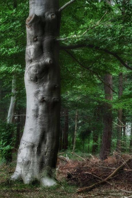 Volop lente in het bos