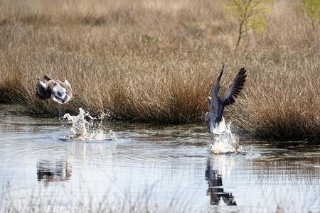 WEGVLIEGENDE GANZEN - DEZE GANZEN VLOGEN VAN DE SCHRIK WEG TOEN ZE MIJ ZAGEN... - foto door jh- op 15-04-2021 - deze foto bevat: water, vogel, fabriek, ecoregio, natuur, natuurlijke omgeving, bek, meer, zoogdier, watervogels