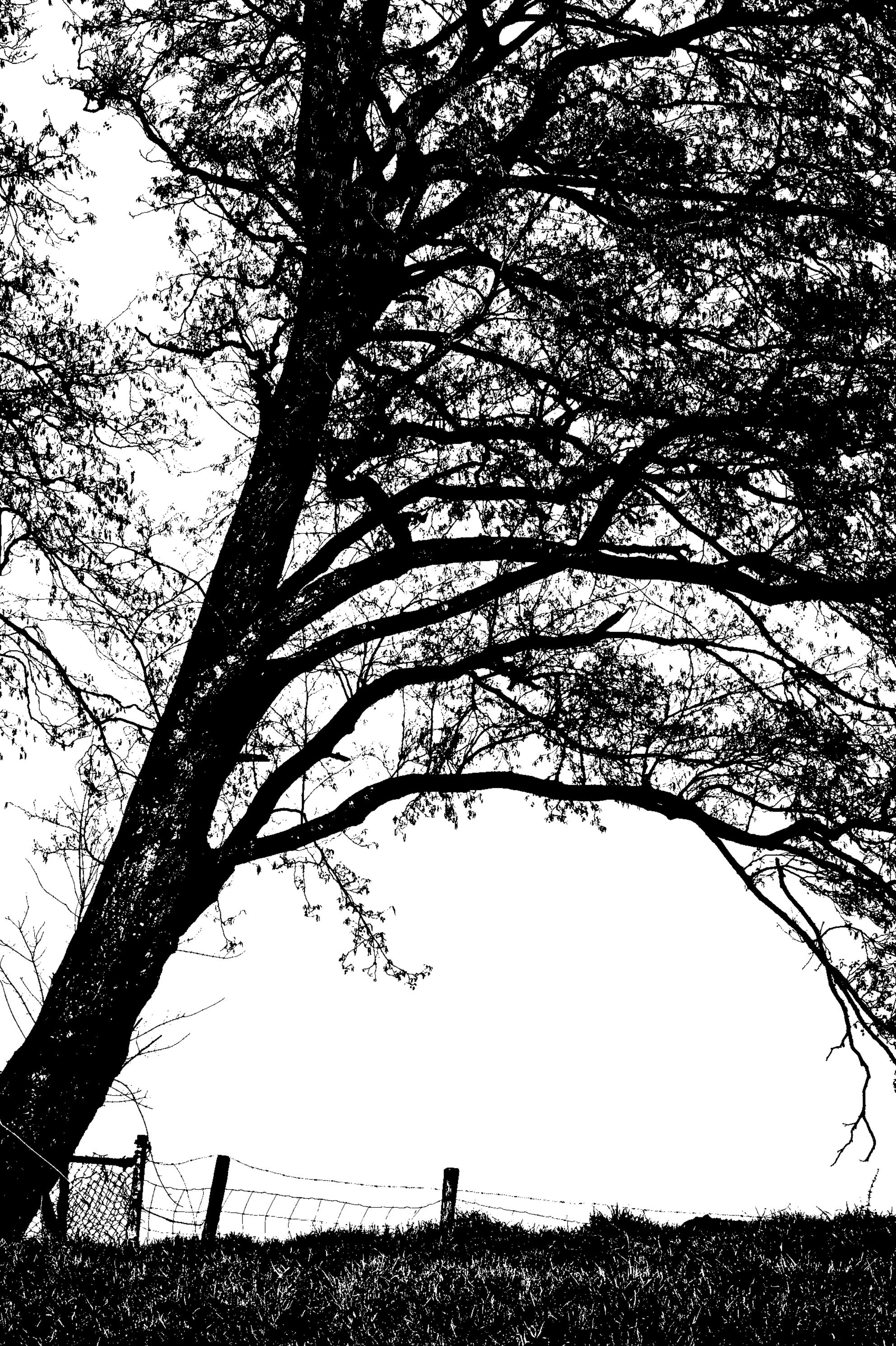 boom - Alle zoomers, zoomvrienden en -volgers, bedankt voor de waardering, tips en aandachtspunten op mijn vorige uploads - foto door PaulvanVliet op 08-04-2021 - locatie: Meerpolder, Zoetermeer, Nederland - deze foto bevat: polder, dijk, boom, hek, zwart wit, monochroom, zoetermeer, meerpolderdijk, buytenwegh, blad, wereld, natuurlijk landschap, plantkunde, takje, lucht, mensen in de natuur, boom, kofferbak, vegetatie