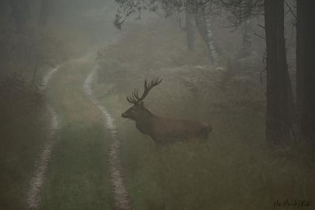 In de mist...