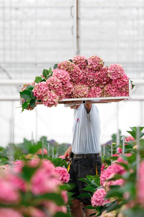 Bloemen oogsten