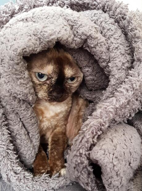 Mijn deken
