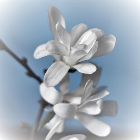 Bloemetjes - Lekker wit - foto door MarideKort op 13-04-2021 - deze foto bevat: bloem, hand, lucht, fabriek, azuur, bloemblaadje, gebaar, takje, wolk, bloeiende plant