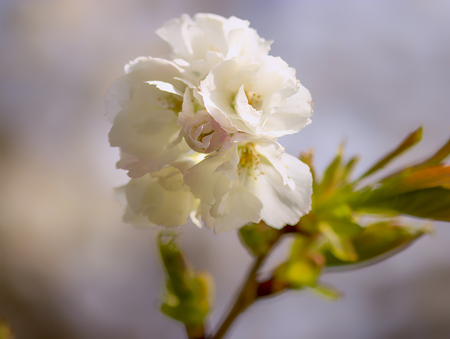 Bloesem - Witte bloesem - foto door cdgrf op 16-04-2021 - deze foto bevat: bloesem, macro, natuur, bloem, fruit, lente, voorjaar, close-up, bloem, fabriek, afdeling, bloemblaadje, takje, terrestrische plant, bloesem, bloeiende plant, pedicel, detailopname