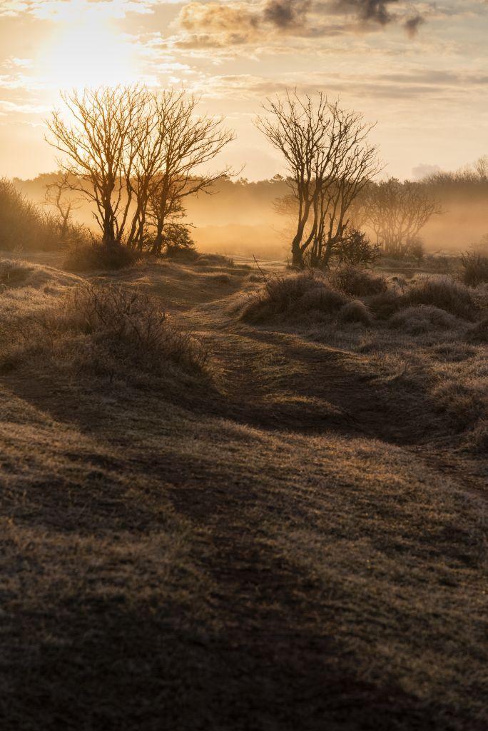 Nevelige morgen - Ochtendmist op het duin. - foto door erveer op 03-05-2021 - locatie: 1901 KK Bakkum, Nederland - deze foto bevat: landschap, natuur, nevel, ochtenlicht, zonsopkmst, wolk, lucht, fabriek, atmosfeer, plant gemeenschap, natuurlijk landschap, afdeling, boom, hout, takje