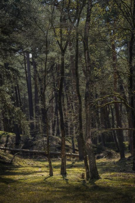 Landschap van bomen