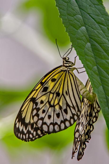 Vlindersafari