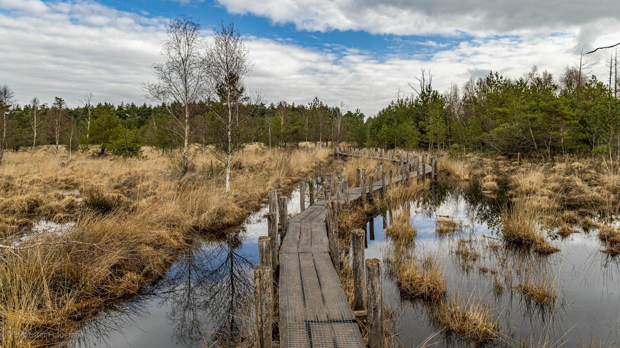 Plankenpad  - Plankenpad Dwingelderveld  - foto door ErikEsterFotografie op 08-04-2021 - deze foto bevat: #natuur, water, drenthe, pad, plankenpad, wolken, water, wolk, lucht, fabriek, boom, natuurlijk landschap, fluviatiele landvormen van beken, lacustrine vlakte, biome, hout