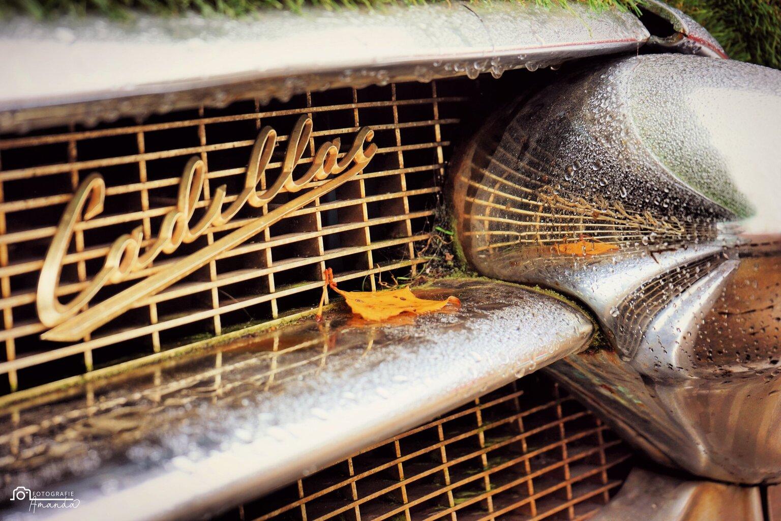 The Cadillac - Prachtige reflectie na een regenbui, een klassieker net zoals deze Cadillac. - foto door vdbergamanda op 17-04-2021 - deze foto bevat: cadillac, reflectie, regen, drup, druppel, classic, spiegeling, regendrup, auto, klassieker, rooster, automotive verlichting, kap, motorvoertuig, automotive ontwerp, auto, mesh, bumper, automotive buitenkant, voertuig