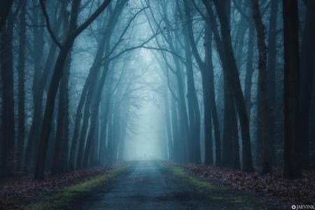 Mood - Moody - foto door vwinke op 17-04-2021 - deze foto bevat: sfeer, spooky, bos, mist, duister, bomen, natuur, landschap, fabriek, lucht, atmosfeer, natuurlijk landschap, mist, boom, hout, afdeling, weg oppervlak, kofferbak