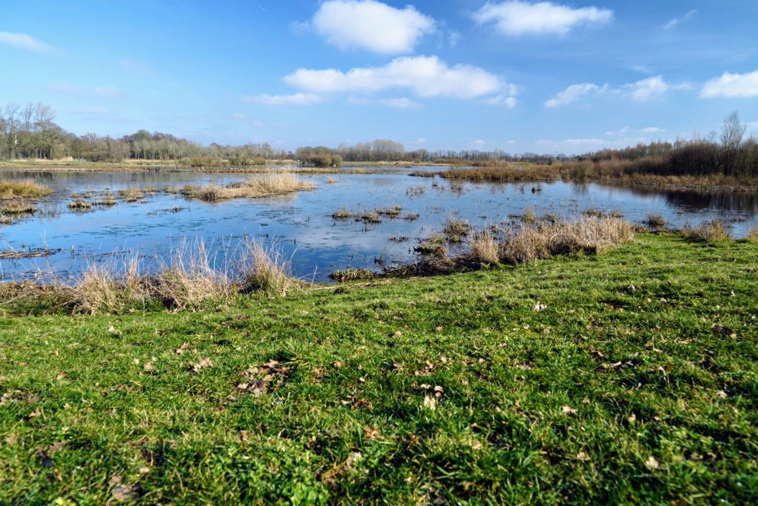 Ven 2 in de Kampina - Waterberging en vogelgebied - foto door Frenk2021 op 11-04-2021 - locatie: Oirschot, Nederland - deze foto bevat: water, wolk, lucht, fabriek, bloem, natuurlijke omgeving, fluviatiele landvormen van beken, natuurlijk landschap, boom, meer