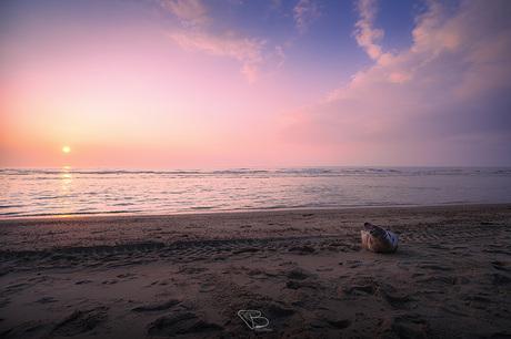 Zeehond bij zonsondergang