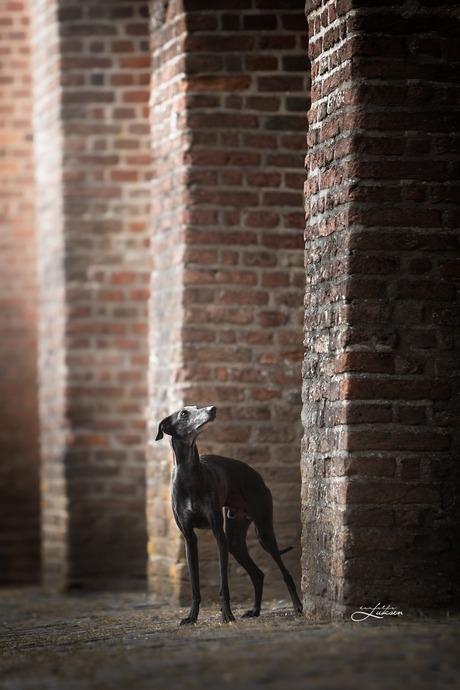 Kleine hond in de grote stad