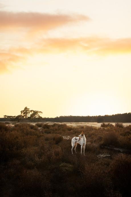 Zonsondergang in de Soesterduinen