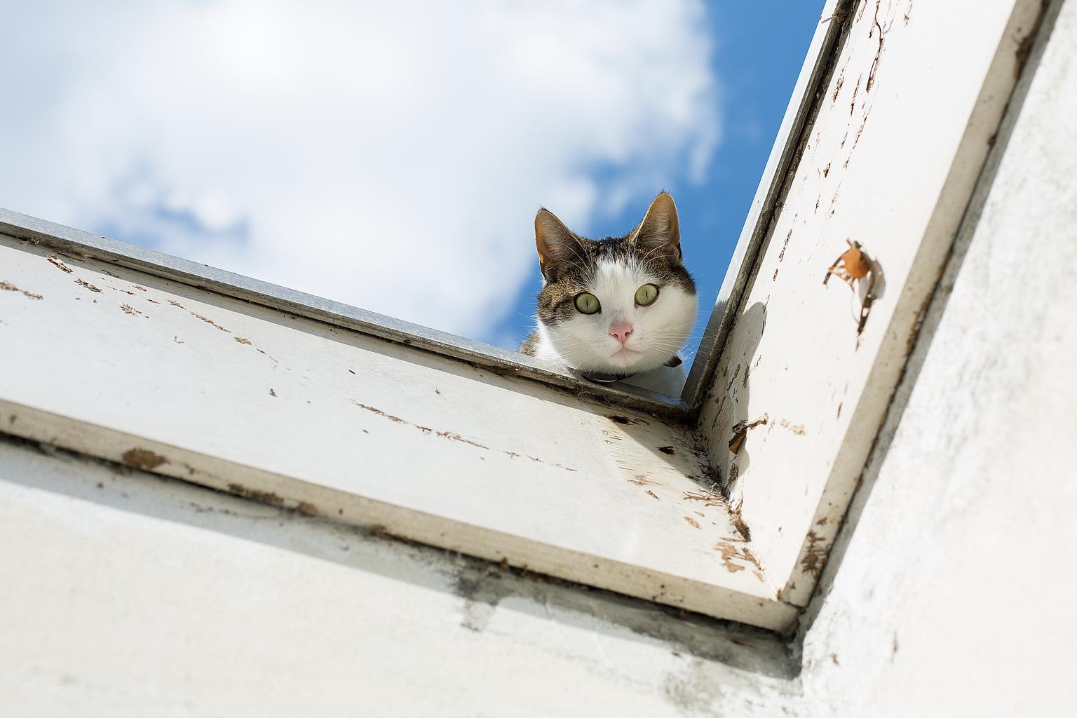 kiekeboe - Zomaar grappig. - foto door annaseb op 16-04-2021 - deze foto bevat: lucht, kat, wolk, gewervelde, venster, hout, zoogdier, felidae, carnivoor, gebouw