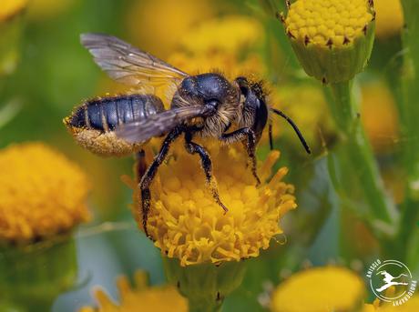 Genieten van de nectar
