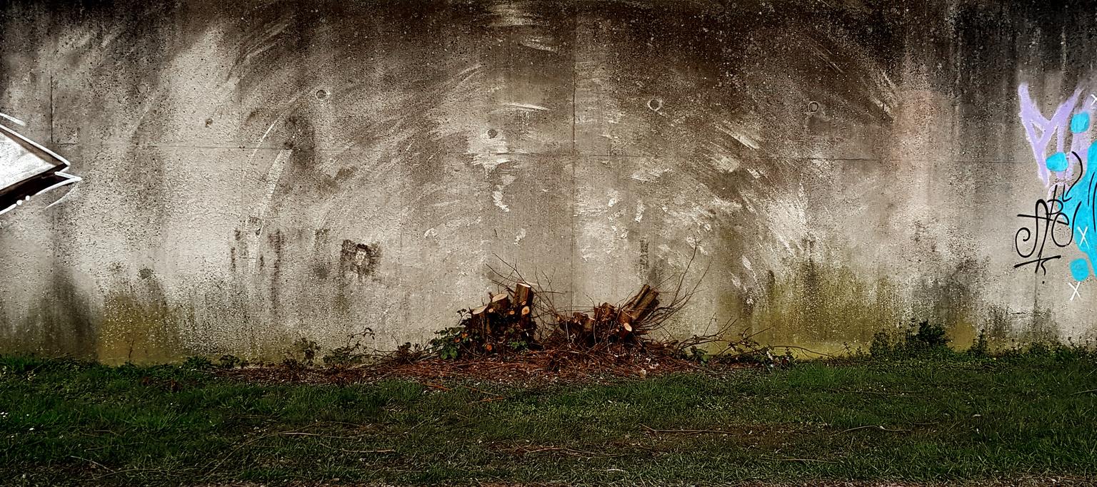 ....blueprint..... - ....de herinnering aan een boom..... - foto door Foto60 op 09-04-2021 - locatie: Schiedam, Nederland - deze foto bevat: muur, afdruk, beton, atmosfeer, fabriek, mensen in de natuur, natuurlijke omgeving, water, hout, afdeling, organisme, zonlicht, atmosferisch fenomeen