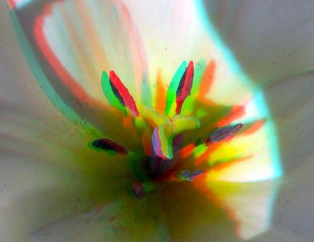 Tulp macro Lumix H-FT012 3D lens - anaglyph stereo red/cyan - foto door hoppenbrouwers op 17-04-2021 - locatie: Rotterdam, Nederland - deze foto bevat: h-ft012, rotterdam, macro, gf3, lumix, anaglyph, stereo, red/cyan, f+ower, bloem, bloem, bloemblaadje, terrestrische plant, fabriek, kunst, bloeiende plant, pedicel, water, macrofotografie, stuifmeel