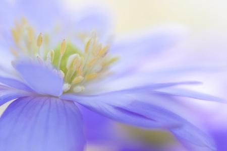 In the centre - Het hart van een anemoontje.  Wat is daar veel moois te vinden. - foto door tineke1 op 16-04-2021 - deze foto bevat: bloem, fabriek, azuur, lucht, bloemblaadje, purper, kruidachtige plant, elektrisch blauw, eenjarige plant, bloeiende plant