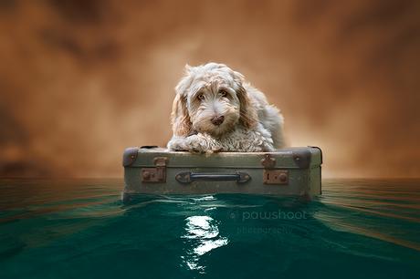 puppy op vakantie