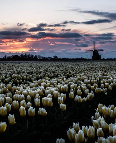 Typisch Hollandse zonsondergang