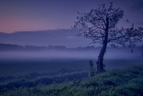 A foggy sunset...
