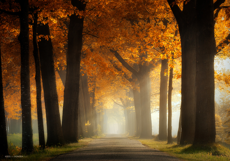 Country Road 🍁 ☀️