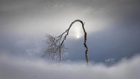 De hemelboom