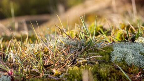 Mossen en grassen