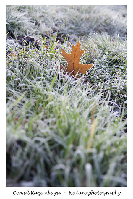 Blad - Blad.. - foto door CemalKazankaya op 13-04-2021 - deze foto bevat: cemal kazankaya, blad, natuur, bruin, macro, bokeh, bloem, dof, groen, kaud, fabriek, gras, organisme, vegetatie, terrestrische plant, water, takje, natuurlijk landschap, boom, aanpassing