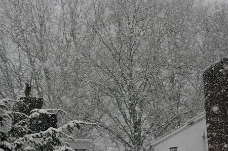 Winter  - Winter in Maastricht - foto door Smeets op 07-04-2021 - locatie: Maastricht, Nederland - deze foto bevat: sneeuw, afdeling, takje, kofferbak, bevriezing, landschap, boom, tinten en schakeringen, monochroom, monochrome fotografie