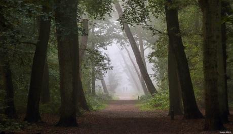 Mistig in het bos.