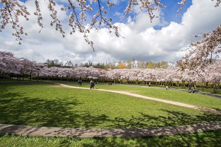 Bloesembos 4 - Amsterdamsebos  Tussen de hagel en sneeuwbuien was het goed te doen - foto door nak-kos op 13-04-2021 - deze foto bevat: natuur, voorjaar, bloesem, toerisme, lucht, wolk, fabriek, natuurlijk landschap, afdeling, vegetatie, boom, gras, struik, grasland
