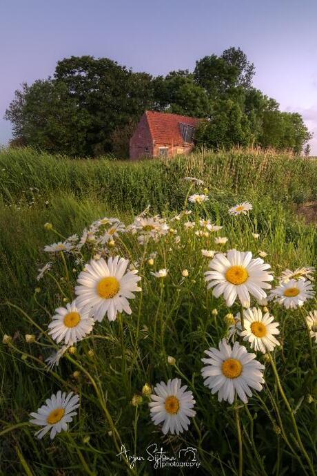Een zomers Fries landschap.